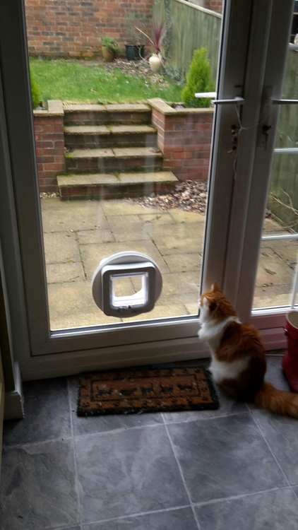 Cat Flap Installers Morpeth Cat Flap Fitters Cramlington And